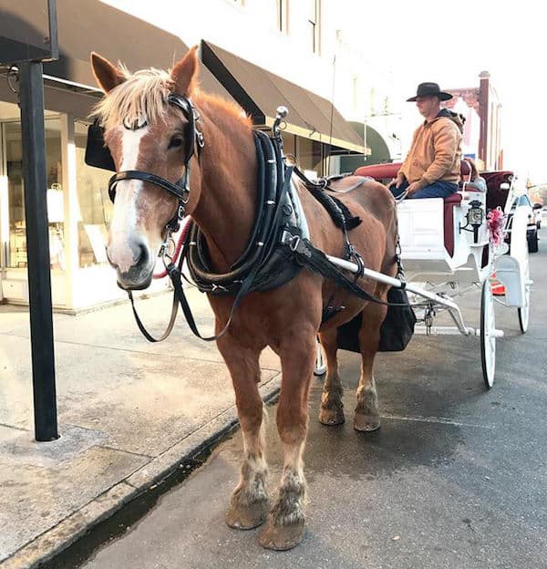 Free Carriage Rides In Historic Downtown Smithfield