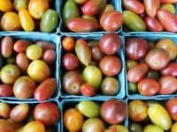 Tomato Day at Durham Farmers' Market