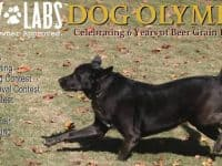 Friday Night Movie (with your dog) at Barley Labs
