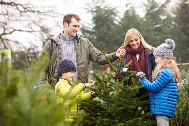 Interested in picking your own Christmas tree near Raleigh, Durham, Chapel  Hill and surrounding areas? The holiday season is finally here, which for  many ... - Christmas Tree Farms And Lots In The Triangle - Triangle On The Cheap